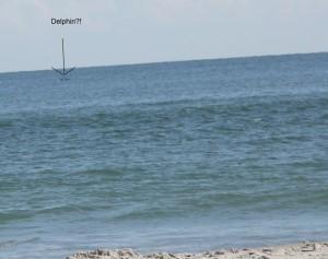 Ein ganzer Delphin?