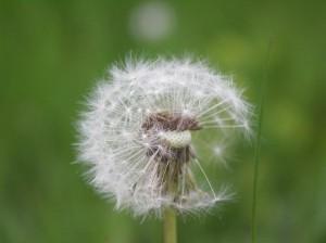 allergikersalptraummakro