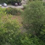 Boklok in Auringen: Rodung des Grundstücks